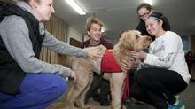 Dalhousie University students Kyla Strowbrige, left, and April Drake, right, pet Colby a five-year-old Australian Labradoodle. (Sándor Fizli For The Globe and Mail)