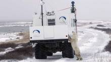 A polar bear investigates a vehicle recording imagery for Google Maps in Churchill, Manitoba. (Google)