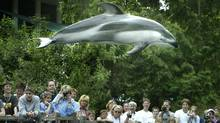Spinnaker, a 16-year-old male dolphin who died March 8, 2012 is seen here flying high above the crowd in Vancouver July 16, 2003. (John Lehmann/The Globe and Mail/John Lehmann/The Globe and Mail)