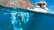 Diving offers a profound sense of peace, akin to a meditative state. (Bruce Kirkby)