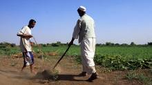 Sudanese farmers prepare their land for agriculture on the banks of the river Nile in Khartoum. (MOHAMED NURELDIN ABDALLAH/REUTERS)