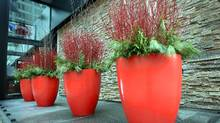 "Jan 27, 2010 - Red planters in front of the Hilton hotel, for style section column, ""spotted"" Photo: Charla Jones/Globe and Mail (Charla Jones/Charla Jones/THE GLOBE AND MAIL)"