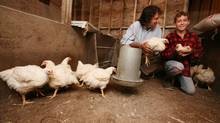 Chef Michael Smith poses with 13 year old farmer Mathias Drake and some of the chickens that he is raising.