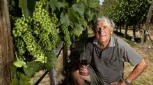 Ed Schiller stands in his small vineyard in Kelowna, B.C. (Jeff Bassett for The Globe and Mail)/Jeff Bassett for The Globe and Mail)