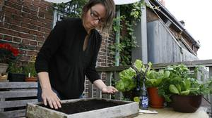 In Toronto, Gayla Trail prepares a new bed for late-season plantings. When to sow varies wildly among veggies, so calculate individually.
