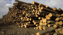 File photo of large stock piles of wood in B.C. (Jeff Bassett/The Canadian Press)
