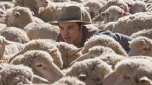 SETH MACFARLANE directs, produces, co-writes and plays the role of the cowardly sheep farmer Albert in A Million Ways to Die in the West (Photo Credit: Lorey Sebastian)