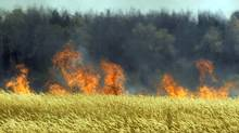 In this Saturday, July 31, 2010, file photo a field of unidentified cereals burning near the town of Voronezh some 500 km (294 miles) south of Moscow, after weeks of searing heat and practically no rain. A severe drought destroyed one-fifth of the wheat crop in Russia, the world's third-largest exporter, and now wildfires are sweeping in to finish off some of the fields that remained. (Mikhail Metzel/Mikhail Metzel/AP)