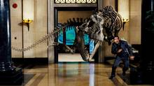 Ben Stiller being chased by a T rex in the CGI-rich movie Night at the Museum. (Rhythm & Hues)