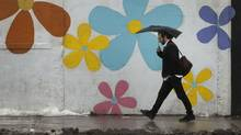 January showers probably won't bring spring flowers but rain and warmer than normal winter temperatures continue to confuse Torontonians. (Moe Doiron/The Globe and Mail)