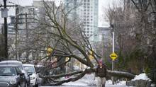 A Cabbagetown resident negotiates fallen trees and icy roads on Wellesley Street in Toronto on Dec. 23, 2013, following the weekend ice storm. (Kevin Van Paassen/The Globe and Mail)