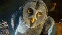 Twiight, an owl voiced by Anthony LaPaglia, in a scene from Legend of the Guardians.