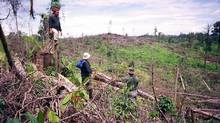 The UPG forest clearance is a photo of a large scale illegal logging operation that was discovered by the elephant patrollers in 2006. It was in the southern end of the Ecosystem south of Kutacane. (Leuser International Foundation/Leuser International Foundation)