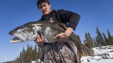 Mr. Erigaktuk with a 32-pound lake trout caught by students on Blachford Lake. (John Lehmann/The Globe and Mail)