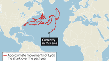 The movements of Lydia the shark. (Trish McAlaster/The Globe and Mail)