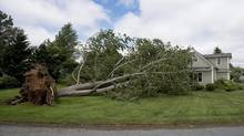 A large uprooted tree rests against a house in Oakland, N.S. on Saturday, July 5, 2014. Thousands of homes and businesses were without power as heavy rains and high winds from tropical storm Arthur buffeted the region. (Andrew Vaughan/THE CANADIAN PRESS)
