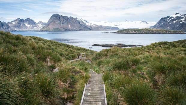 On nearby Prion Island, wooden boardwalks clear a path through tall grass.