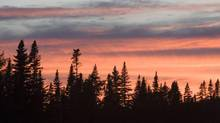 The sun sets behind trees in Newfoundland's Gros Morne National Park. (JONATHAN HAYWARD/THE CANADIAN PRESS)