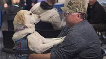 Medric Cousineau, a retired air force navigator who was awarded the Star of Courage, sits with Thai, his service dog who helps him cope with his post-traumatic stress disorder, at a news conference at the legislature in Halifax Friday. Veterans and supporters expressed their disappointment with Ottawa's dealings with what the believe are systemic failures within the Veterans Affairs department. (Andrew Vaughan/THE CANADIAN PRESS)