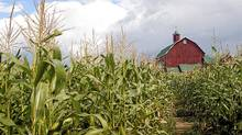 At least five farmland funds have cropped up in Canada, mainly in Saskatchewan and Alberta. (istock/istock)