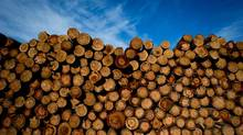 Logs to be processed are pictured at Interfor's Acorn Division mill in Delta, B.C., on Sept. 14, 2012. (Darryl Dyck for The Globe and Mail)