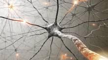 Neurons (Thinkstock)