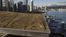 Landscaper Kim Noble grooms the grass after it was given its annual mowing on the roof of the Vancouver Convention Centre in Vancouver, British Columbia. The six acre roof is one of the 10 largest green roofs in the world with some 400,000 indigenous plants and grasses that includes four beehives. (Andy Clark/Reuters)