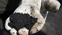 An oil worker holds raw oil sands near Fort McMurray, Alta. Pressure over environmental concerns has forced Germany's largest scientific organization to pull out of joint research with Alberta on better ways to upgrade oil sands bitumen. (Jeff McIntosh/THE CANADIAN PRESS)