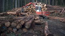 A section of forest is harvested by loggers near Youbou, B.C., on Jan. 14, 2015. Canada's top negotiator in the softwood lumber trade dispute with the United States says discussions around the disagreement have waned since President Donald Trump took office. (JONATHAN HAYWARD/THE CANADIAN PRESS)