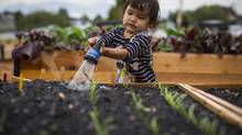 Eri MacArthur, 2, helps her mom my watering her vegetable plot at Shifting Growth Garden in the 2500 Block of East Hastings St. in Vancouver September 5, 2013. (John Lehmann/The Globe and Mail)