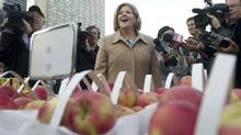 Ontario NDP leader Andrea Horwath walks around Nathan Phillips Square overlooking a farmers market as the media swarms her during a campaign event in Toronto on Wednesday, Oct. 5, 2011. (Nathan Denette/THE CANADIAN PRESS)