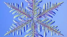 A snow crystal (Kenneth Libbrecht)