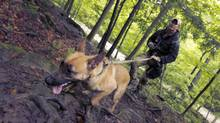 Tier1 K-9 co-owner Kevin Whitenect, a former soldier, works with Kali, a Belgian Malinois during training at an unnamed location in Ontario. (Peter Power/The Globe and Mail/Peter Power/The Globe and Mail)