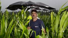 Walter Charbonneau in one of his corn fields in Chatham, Ont. Thursday July 19, 2012. Charbonneau expects an average corn crop this year thanks to some last minute rain in southwestern Ontario. (Brent Foster For The Globe and Mail)