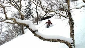 "Cutting through soft powder: ""smoky snow,"" as guide Noriyuki Watanabe calls it."