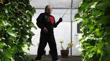Personal fencing coach Nan-Sang Ho in his home built 50-foot-long piste has been fencing for over 50 years, and competing until he was 65. He's coached thousands of students, including his only Olympian, Monica Peterson for the London Olympics. (Chad Hipolito For The Globe and Mail)