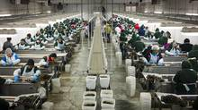 The committee's report makes 21 recommendations, including some addressing concerns that workers are vulnerable to abuse. (John Lehmann/The Globe and Mail)