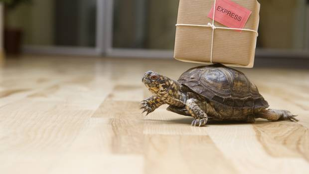 A turtle carries a package.