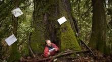 Kirk Robertson reads a poem inside a cottonwood tree in McLellan Forest, Langley township after local poet Susan McCaslin started a project that has taken off across Canada to save the forest from development. Township of Langley, the birthplace of British Columbia, recently decided to sell off some densely forested parcels of land to raise money for a new recreation centre. (John Lehmann/The Globe and Mail)