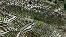 Rice Terraces #2, Western Yunnan Province, China 2012. (Ed Burtynsky)