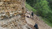 """Paleontologists work on fossil-bearing sediments at the """"North Face"""" fossil site in Driftwood Canyon Provincial Park, British Columbia, where the extinct hedgehog fossils were collected, in 2010. (Dave Greenwood/THE CANADIAN PRESS)"""
