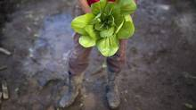 A woman holds a bunch of bok choy from her crop in July, 2013. Contrary to popular belief, the majority of Canadian farms are small-scale operations. (Moe Doiron/The Globe and Mail)