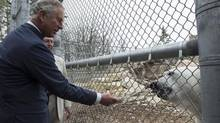 Prince Charles feeds a polar bear at the Assiniboine Park Zoo in Winnipeg on Wednesday, May 21, 2014. (PAUL CHIASSON/THE CANADIAN PRESS)