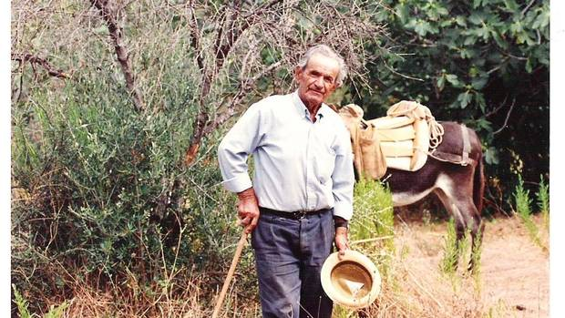 The Rallis family's tradition of harvesting olives goes back to at least Theo Rallis's grandfather, Theodoros, on a centuries-old farm and orchard in the Peloponnese region in Greece.
