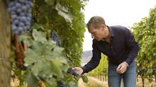 John Skinner, of Painted Rock Estate Winery in B.C., already sells directly to Ontario consumers, despite that province's regulation of interprovincial wine sales, 'and I'm not apologizing for it.' (Carey Tarr)
