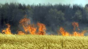 In this Saturday, July 31, 2010, file photo a field of unidentified cereals burning near the town of Voronezh some 500 km (294 miles) south of Moscow, after weeks of searing heat and practically no rain. A severe drought destroyed one-fifth of the wheat crop in Russia, the world's third-largest exporter, and now wildfires are sweeping in to finish off some of the fields that remained.