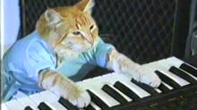 About 90.9 per cent of Canadian Internet users were watching online video in October, compared to 87 per cent of U.S. users. The report didn't specify what we're all watching, we just assume it's keyboard cat. (YouTube)