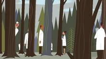 The separation of powers within the medical profession often limits the ability of practitioners to see the forest for the trees. (PAUL ROGERS/New York Times)