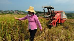 A farmer walks ahead of a harvester as a paddy field is cropped in Xiushui County of Jiangxi Province, China