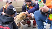 A dog named Koda was found with a B.C. toddler who was lost in the Yukon but discovered alive more than 24 hours later. Searchers found the two-year-old who had wandered away from a campsite near Tay Creek, about 50 kilometres north of Ross River, Yukon. (Michael Pealow/Michael Pealow)